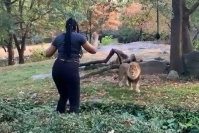 león gryffindor
