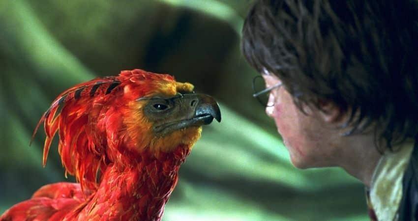 Ave Fénix Harry Potter