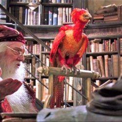 Ave Fénix de Albus Dumbledore