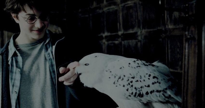 Hedwig y Harry Potter